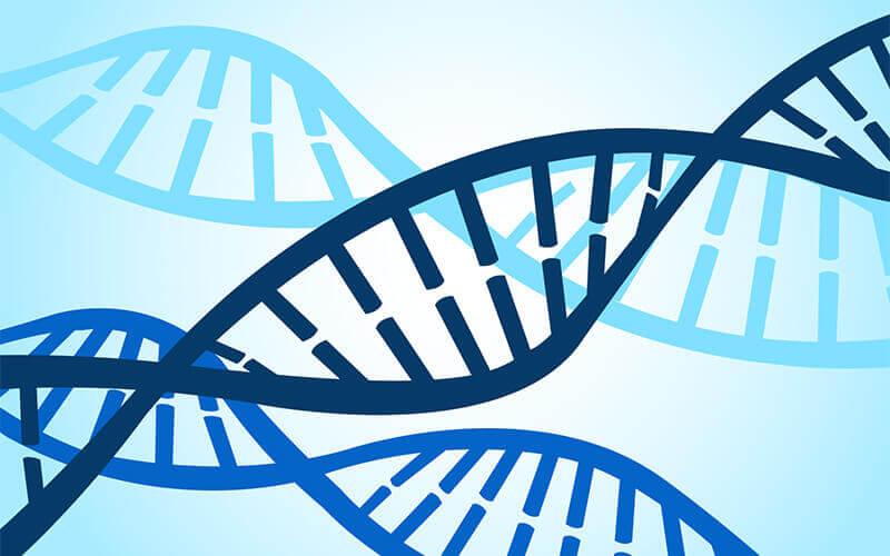 DNK je priručnik s uputama, koji našem tijelu govori kako da se raste i razvija.