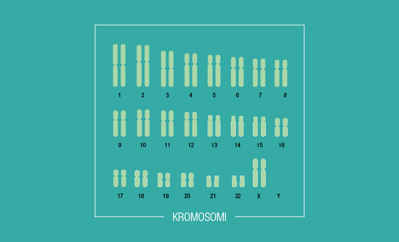 DNK je 'zapakirana' u strukture koje se zovu kromosomi